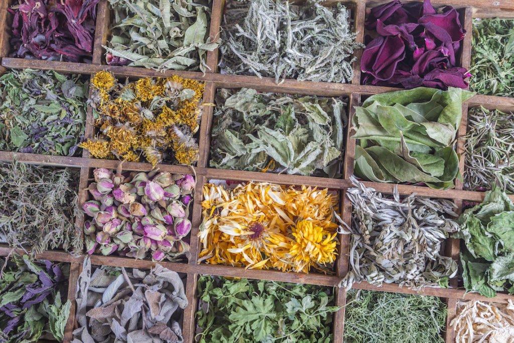 Heilpflanzen und Kräutermedizin