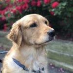 Pflege für den Hund, der kümmert sich um dich zu Holen! Pet Care