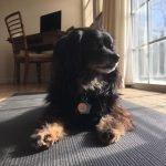 5 Effektive Möglichkeiten zur Behandlung Ihres Hundes Arthritis zu Holen! Pet Care