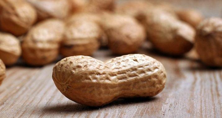 Allergie: Nach Immuntherapie täglich Erdnüsse essen