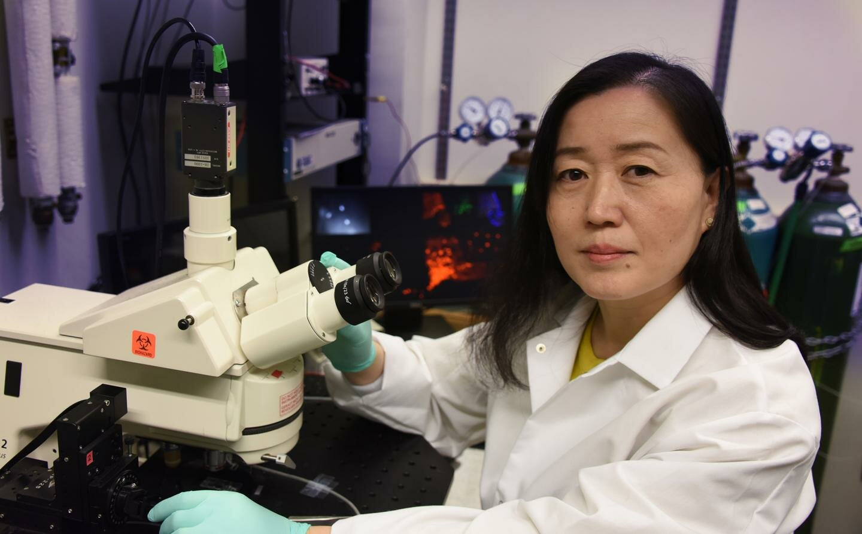 Depression Umgekehrt bei männlichen Mäusen durch die Aktivierung der gene, die hilft, Neuronen erregen