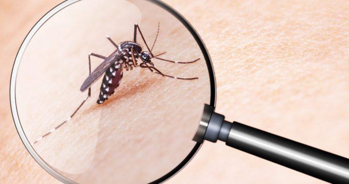 Weltweite Mücken-Plage im Anmarsch- auch Deutschland ist betroffen