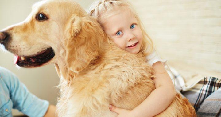 Hunde sind Überträger von neuen gefährlichen Viren