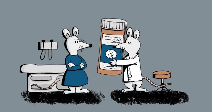 Die meisten biomedizinischen Forschung erfolgt bei männlichen Tieren—das ist ein problem der öffentlichen Gesundheit