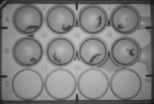 Untersuchung der Auswirkungen von Drogenabhängigkeit und Verschmutzung auf das Verhalten in Mensch und Tier