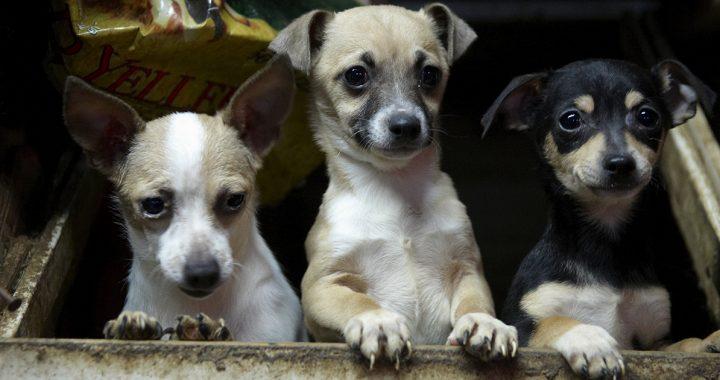 US-Haus Geht mit den Rechtsvorschriften Bedeutende Fortschritte für den Tierschutz!