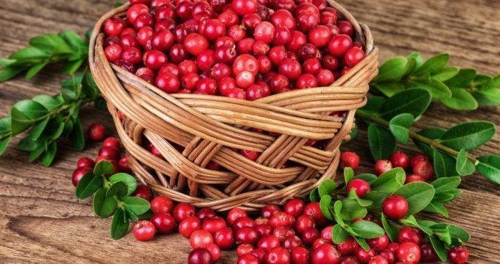 Blaseninfektionen: Mit Cranberries und Antibiotika wirksam resistente Bakterien bekämpfen