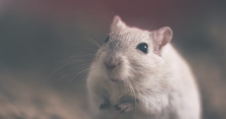 CRISPR verwendet, um die Symptome der Muskeldystrophie in Mäuse-Modellen