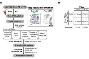 Entschlüsselung Gehirn somatische Mutationen im Zusammenhang mit der Alzheimer-Krankheit