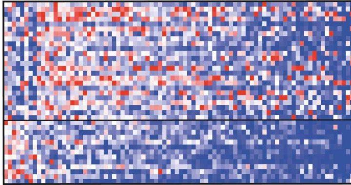 Gut Mikroben können Einfluss auf den Kurs des ALS