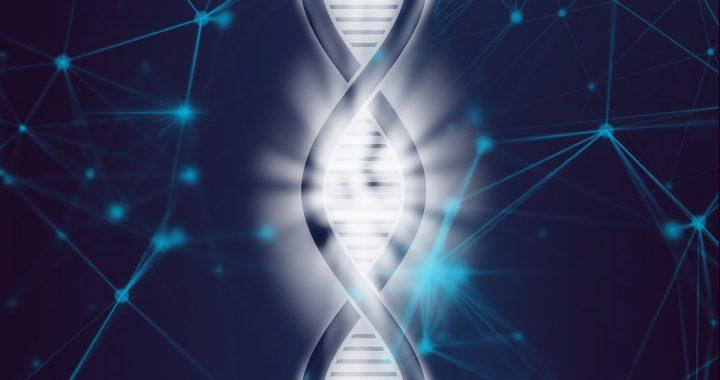 Einfaches Protokoll für die Beurteilung der Reifung von HPC aus induzierten pluripotenten Stammzellen