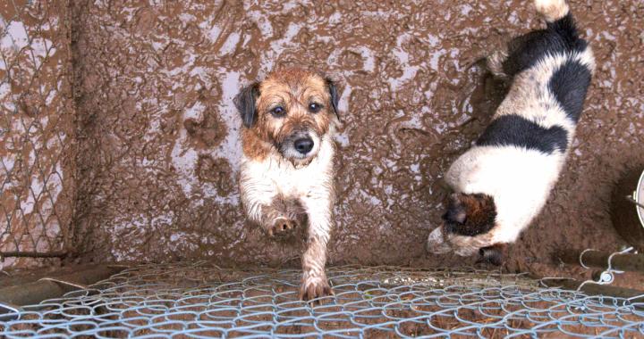 Großen Zeitung Stellt USDA Versagen der Tiere zu Schützen
