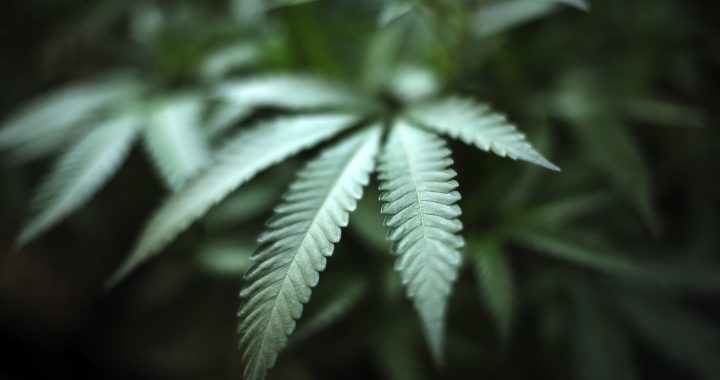 """'Dies ist nicht Ihre Mutter Marihuana,"""" surgeon general sagt"""