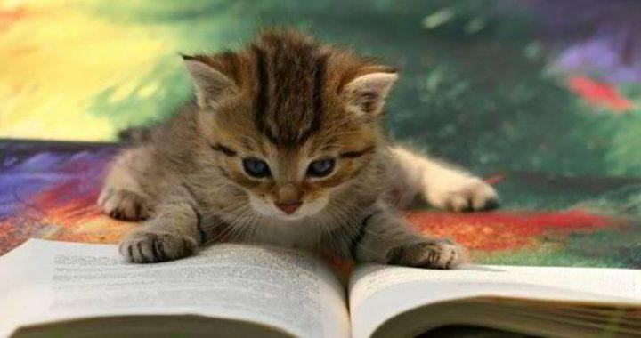 Ein Buch Lesen, um einen Vorteil für dich Selbst und einen Pelzigen Freund!
