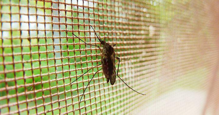 Klinisch Stumme rezidivierender malaria kann immer noch eine Bedrohung darstellen