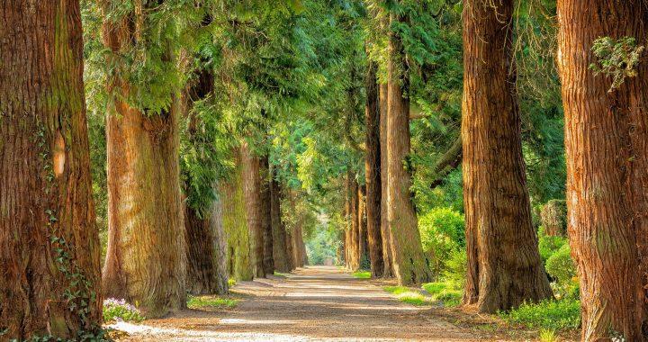 Menschen Leben in der Nähe von Grünflächen, sind bei niedrigeren Risiko von metabolischen Syndrom