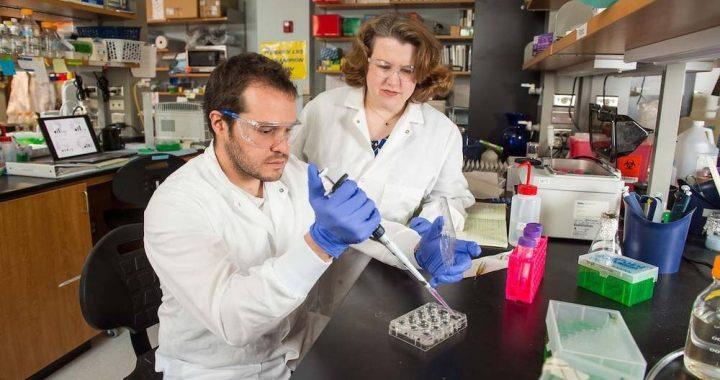 Forscher entdecken kritische Prozess, wie Brustkrebs breitet sich in den Knochen
