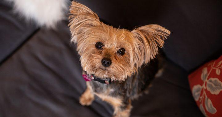10 Gründe, um Anzunehmen, ein Tierheim Hund