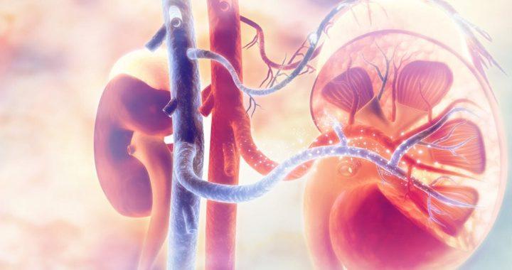 Organe 'zu riskant' zu Spenden, kann sicher sein, für die transplantation