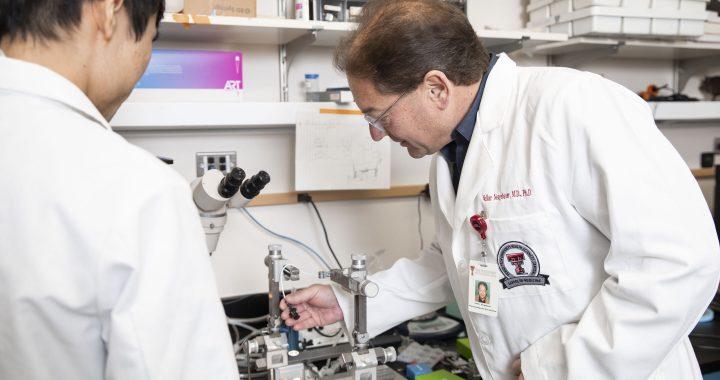 Studie zeigt Mechanismen des Gehirns potential haben, zu blockieren, arthritis-Schmerzen