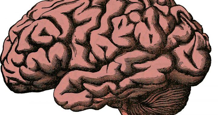 Ein Schlüssel, um die opioid-Krise könnte zu wissen, warum manche Gehirne sind einfach süchtig