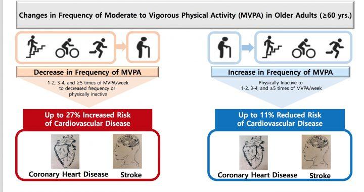 Erhöhte Belastungen über dem Alter von 60 Jahren reduziert das Risiko von Herzerkrankungen und Schlaganfall