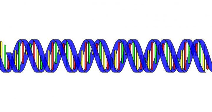 Online-tool hilft Patienten entmystifizieren die 'Büchse der Pandora' der genomischen Sequenzierung