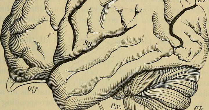 Atmung-der Schlüssel zu mehr Sauerstoff im Gehirn