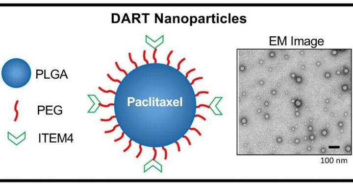 Neue Nanopartikel-Therapie bietet mögliche neue Behandlung für aggressiven Brustkrebs