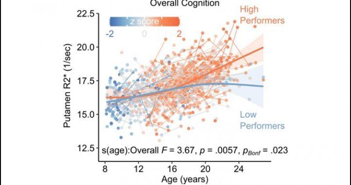 Das Gehirn benötigt Eisen für eine gesunde kognitive Entwicklung