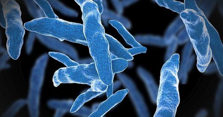 Kurz-Kurs rifamycin-basierten Regimen bevorzugt für latente TB