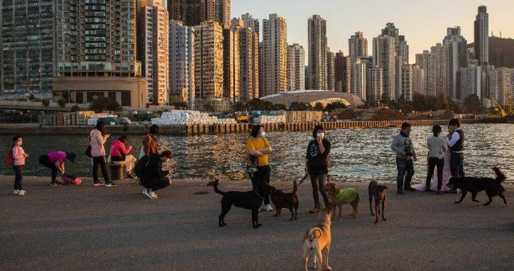 Hund in der Quarantäne in Hong Kong mit niedrigen Niveaus der Corona-Virus