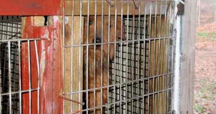 USDA Durchsetzung des Tierschutzgesetzes Weiter Sinken