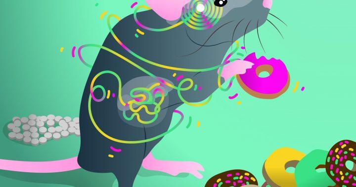 Folgen Sie Ihrem Bauchgefühl: Neu identifizierten Verdauungs-Gehirn-Achse steuert die Wahl der Lebensmittel