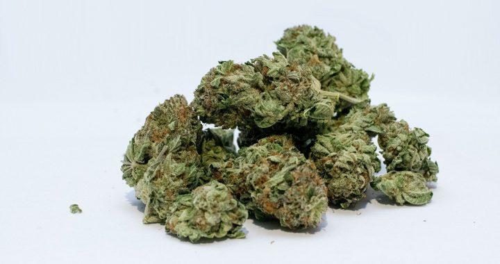 Benutzer von hochwirksamem cannabis zu vier mal häufiger zu melden, damit verbundene Probleme