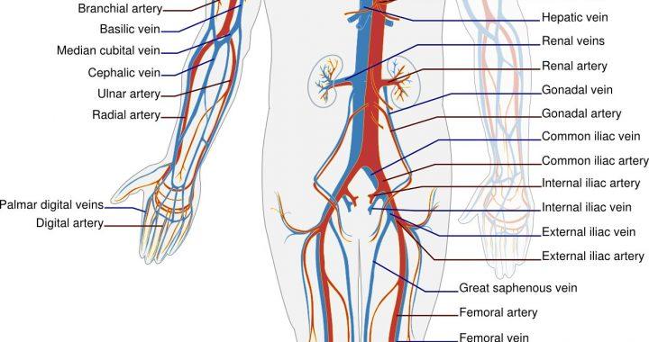 Neue Entdeckung für die Behandlung der vaskulären Störung