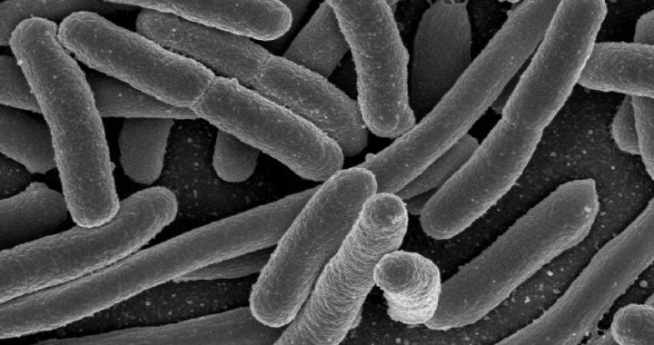 Wiederkehrende Harnwegsinfektionen verbunden mit versteckten reservoir