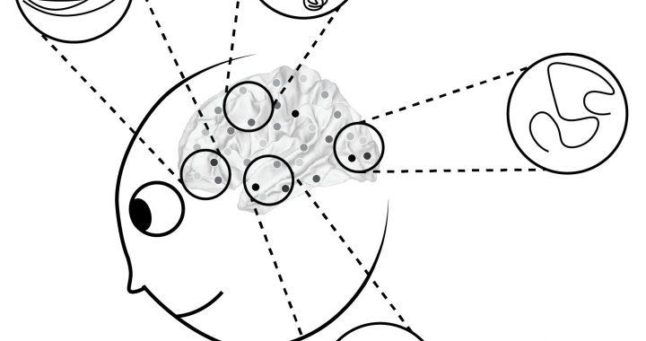 Einen neuen Rahmen für das Verständnis der dynamischen Darstellungen in vernetzten neuronalen Systemen