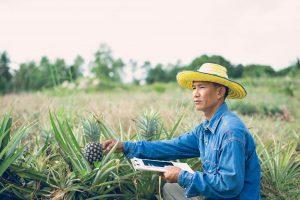 Umweltfreundliches Papier aus Ananas-Abfällen