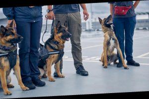 """Spürhunde arbeiten als """"Corona-Tester"""" an finnischem Flughafen"""